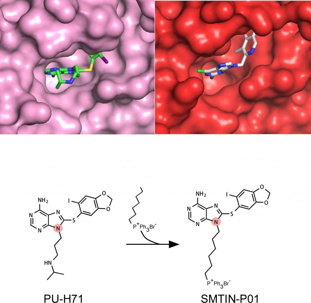 강병헌, 이창욱, 유자형 교수팀은 3차원 단백질 구조 분석으로 스마트 약물 SMTIN-P01을 제작했다.