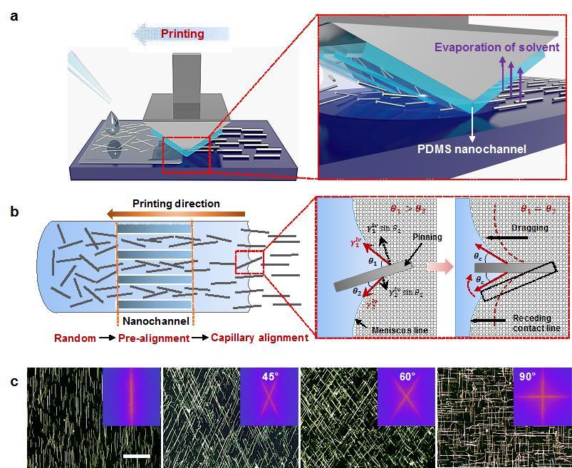 PDMS 나노 채널을 이용한 은 나노와이어 정렬 공정 모식도. B: PDMS 나노 채널을 이용한 은 나노와이어 정렬 원리를 보여주는 도식과 용액 증발에 의한 모세관 힘의 작용 방식을 보여주는 모식도. 고정된 은 나노와이어들은 고체-액체-기체 접촉 선에서 발생하는 모세관 힘에 의해 정렬됨. C: 각기 다른 방향으로 정렬된 은 나노와이어 어레이를 보여주는 암시야 광학 현미경 이미지. 각각의 삽도는 은 나노와이어 정렬을 정량적으로 보여주는 푸리에 변환 이미지.