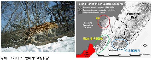 한국표범(아무르표범)(좌) 및 현재 분포지역 러시아의 『표범의 땅 국립공원』