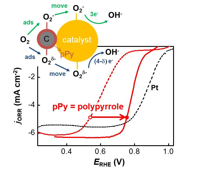 전지의 양극에서 산소 환원 반응은 4단계로 나뉘는데 속도가 가장 느린 첫 번째 단계에 폴리파이롤이 관여를 하면서 촉매반응이 개선된다.