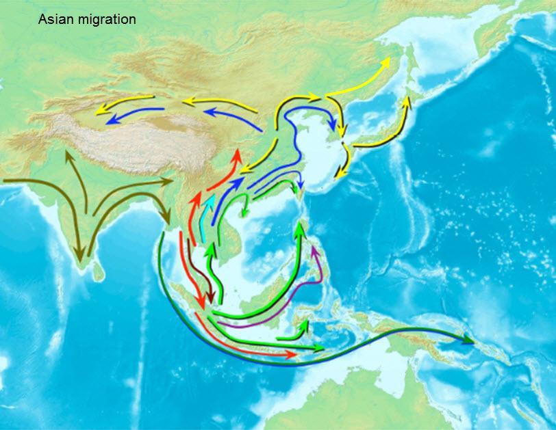 2009년 사이언스(Science)지에 밝혀진 아시아인의 주요 이동경로. 한국인은 남방계가 올라온 거대한 흐름에 속해있다.