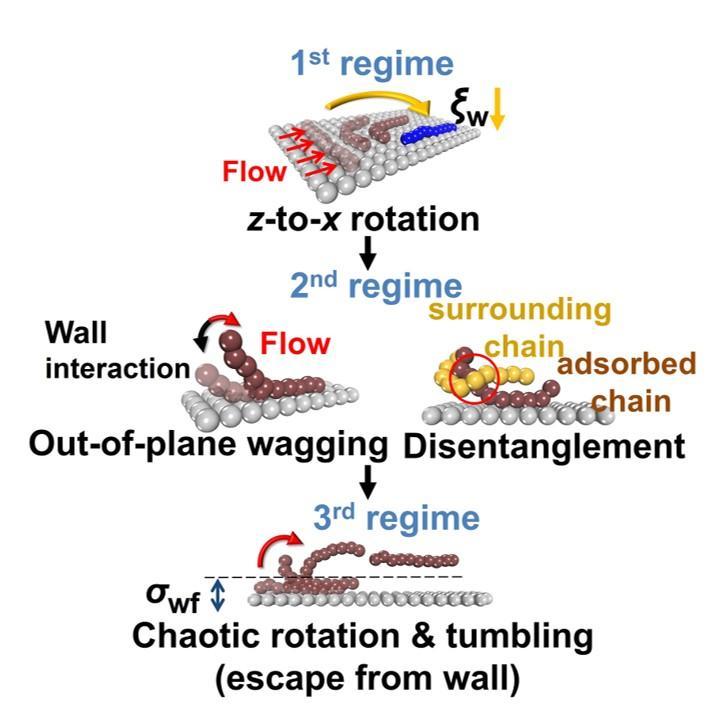 속도 구간별 고분자 용융체의 미끄러짐 현상을 나타낸 그림. 1단계부터 3단계로 갈수록 속도가 빨라진다.