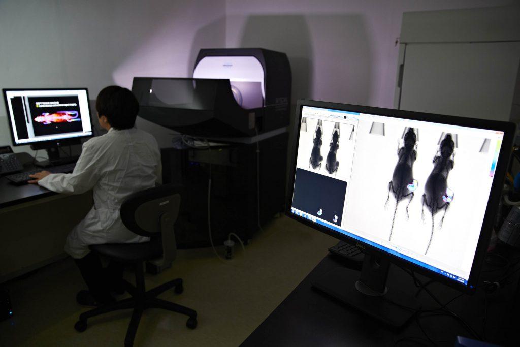 박수아 팀원이 재반입구역의 기기를 활용해 실험동물을 촬영한 영상을 확인하고 있다. | 사진: 안홍범
