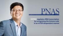 명경재 생명과학부 특훈교수(IBS 유전체항상성연구단장)가 이끄는 연구진이 DNA 복구 단백질의 새 기능을 밝혀 PNAS에 발표했다.   사진: 안홍범