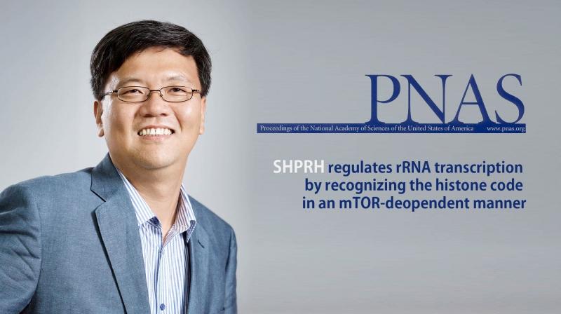 명경재 생명과학부 특훈교수(IBS 유전체항상성연구단장)가 이끄는 연구진이 DNA 복구 단백질의 새 기능을 밝혀 PNAS에 발표했다. | 사진: 안홍범