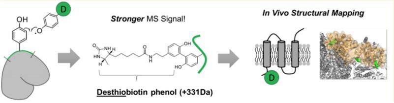 과산화 효소와 디싸이오바이오틴-페놀을 이용한 구조 분석.