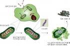 연구그림1_자기조립나노입자를-이용한-항암치료-모식도.jpg