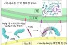 연구그림2_핵과-리소좀-막접촉점-형성-메커니즘.jpg