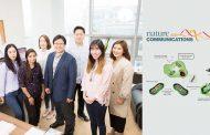 암세포 '밥줄' 끊어 놓는다!… 새 항암치료법 개발