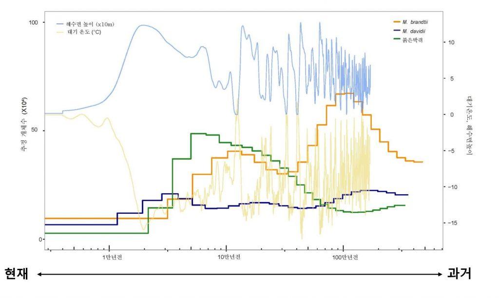 게놈 분석을 통해 박쥐들의 개체 수는 대기온도가 낮아지고 해수면이 높아지던 빙하기(1~5만 년 전)에 큰 감소를 겪었고, 현재까지도 지속적인 감소 추세에 있는 것으로 추정됐다. 이러한 개체 수 감소 경향은 멸종위기에 처한 붉은박쥐에서 두드러졌다.