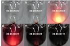 연구그림-HEA-유기물-단결정이-순식간에-3차원-다공성-유기물-구조체로-변하는-과정.jpg