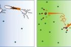 그림3.-박테리아-움직임과-효소-움직임-비교.jpg