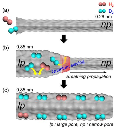 호흡 현상을 보이는 플렉시블 금속-유기 골격체(MIL-53(Al))의 기공에서 중수소가 효과적으로 분리되는 모습.