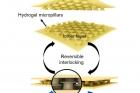 연구그림1-유연하고-투명한-습식-접착제하이드로겔-마이크로후크-어레이-필름.jpg