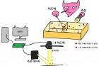 그림3.-정보-엔진-실험-시스템과-맥스웰의-도깨비-비교.jpg