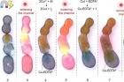 그림6.-세-가지-자극에-모두-반응하는-나노-계면활성제.jpg