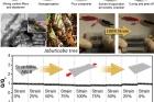 연구그림1_자보티카바-모사한-집전체와-수계전해질로-만든-늘어나는-배터리.jpg