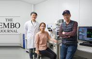 뇌세포 발달 조절단백질, '코필린' 생성원리 밝혔다