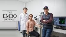 코필린 단백질의 발현 메커니즘을 밝힌 연구진. 왼쪽부터 박동근 UNIST 연구원, 최정현 POTECH 연구원, 민경태 UNIST 교수. | 사진: 김경채