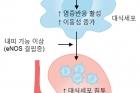 연구그림-고혈당-환경이-톤이비피-유전자를-활성시켜-대식세포의-염증반응이-발생해-신장이-손상되는-과정.jpg