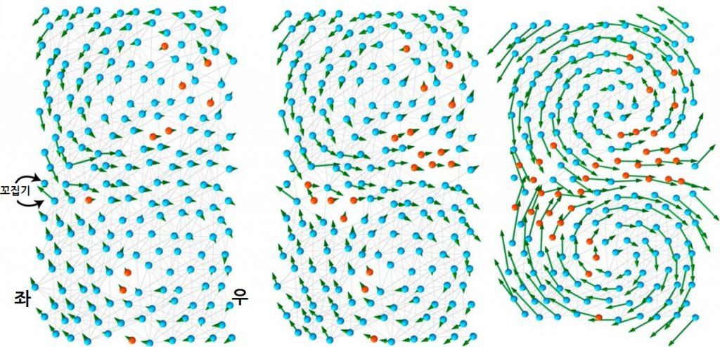 200개 아미노산으로 이뤄진 단백질 모델. 파란색은 무극성 아미노산, 붉은색은 극성 아미노산, 그리고 회색 연결선은 강한 결합을 나타낸다. 왼쪽처럼 진화는 무작위로 연결된 아미노산 구조로 시작해, 한 세대에 한 개 돌연변이가 출현한다.