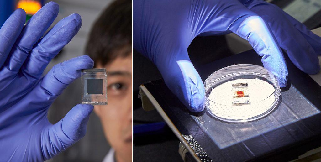 납 없는 페로브스카이트 필름(왼쪽)과 유기염료 감응 태양전지(오른쪽). | 사진: 김경채
