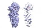 연구진이_규명한_타겟단백질_저해제_3차원_결합구조.jpg
