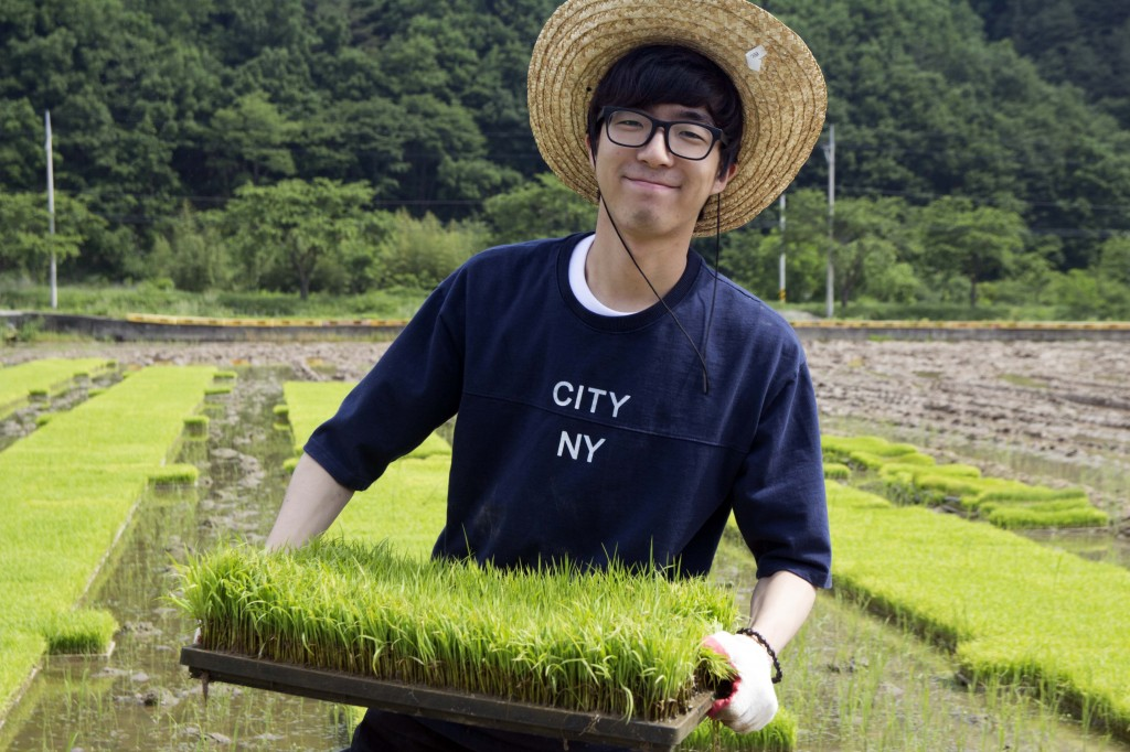 JaeHo Bae (School of Energy and Chemical Engineering) is posing for a portrait while holding a seedbed of rice at the rural community outreach project. [Photo Credit: Jin Woo Park from Studio INGAM]