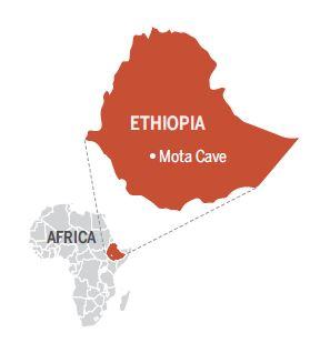 Ethiopian DNA