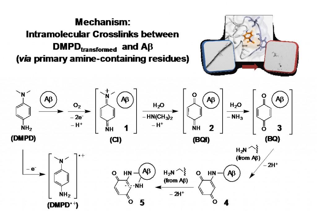 그림5-DMPD가-아밀로이드-베타에-작용하는-메커니즘