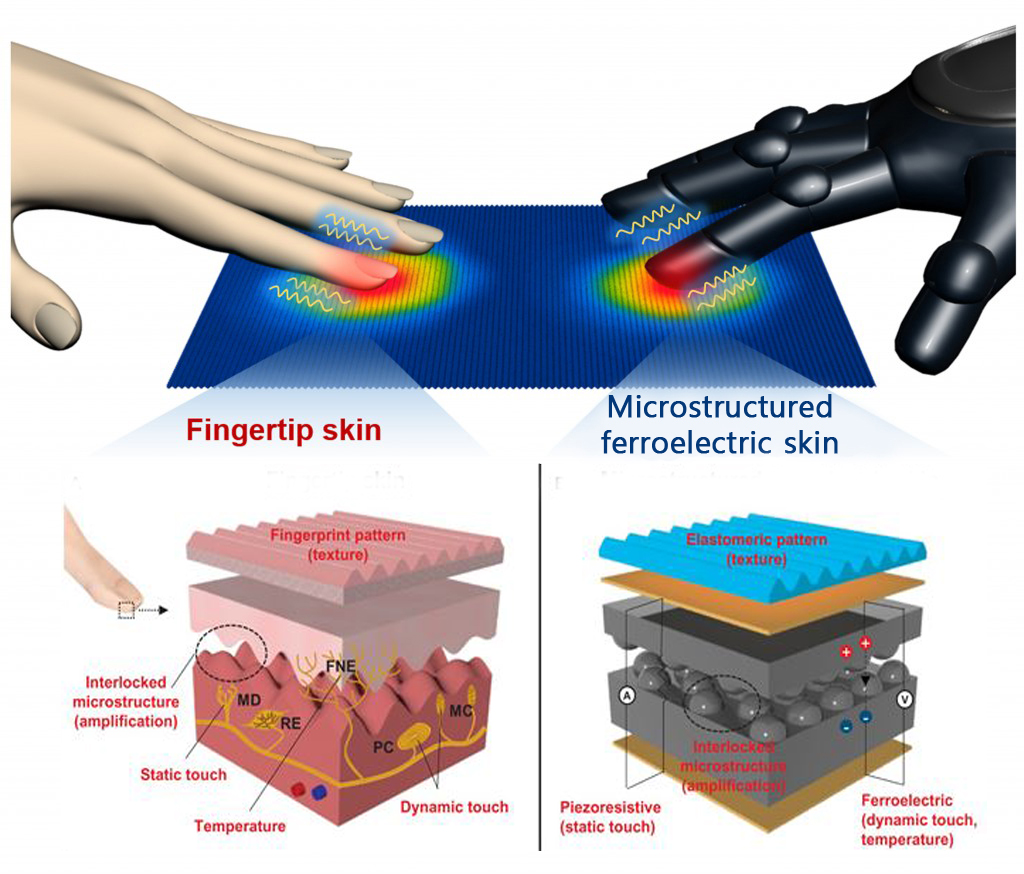 The figure above demonstrates a comparison between the human fingertips and the human-skin-inspired multifunctional e-skin, which can detect pressure, temperature texture, as well as sound.