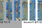바이칼레인-생쥐-비교2.jpg