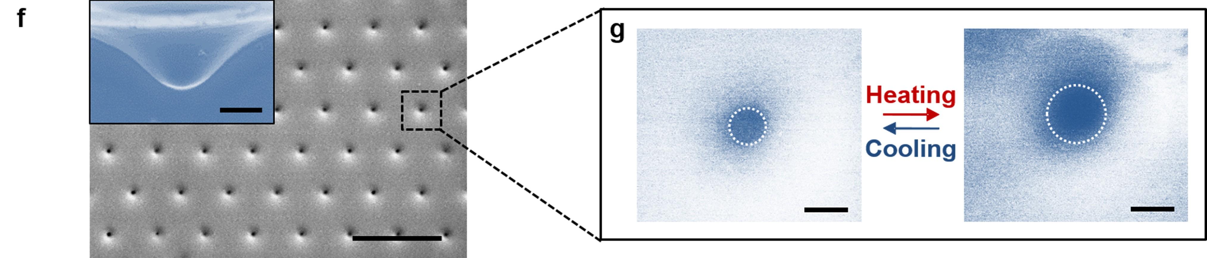 문어 빨판 모사 스마트 접착 패드의 전자현미경 이미지