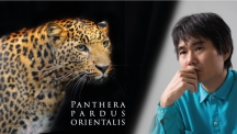 Scientists Publish Complete Genetic Blueprint of Korean Leopard