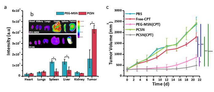 Ex vivo and in vivo efficiency of PCSN.