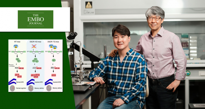 Discover a gene that is responsible for intellectual disability in Down syndrome