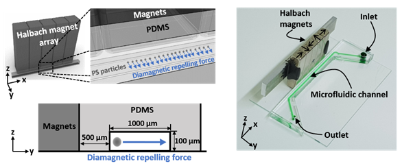 Schematic of the microfluidic device for measuring the magnetic susceptibility of a paramagnetic solution.