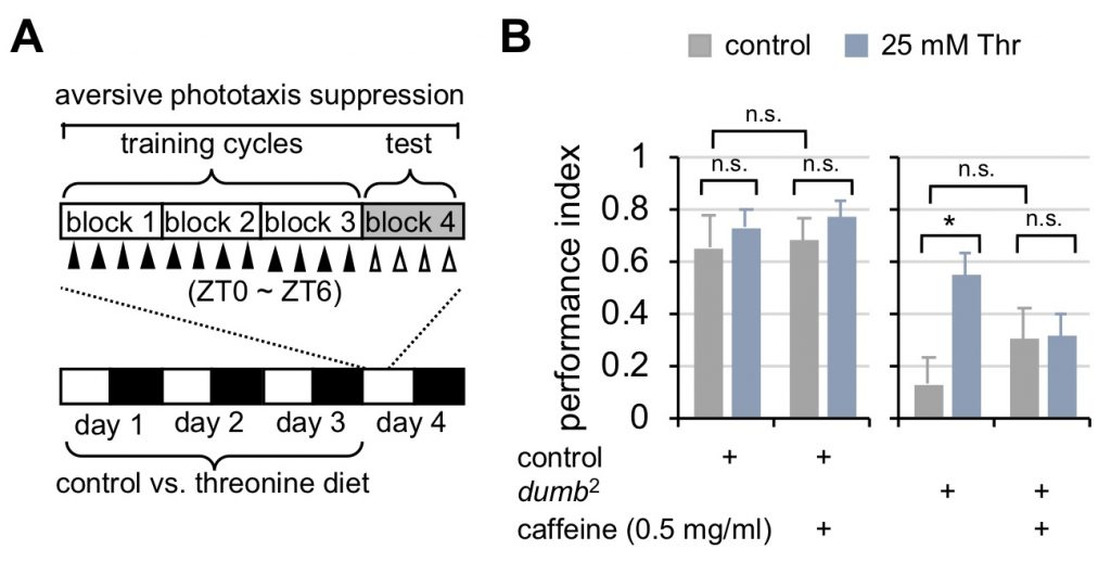 Figure 2. Dietary threonine rescues short-term memory in dumb mutants with memory deficit in a sleep-dependent manner.