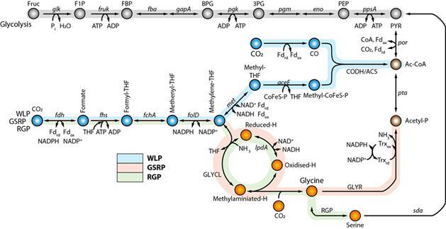KAIST-UNIST joint research_PNAS 3