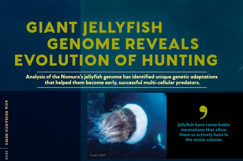 """""""Jellyfish have remarkable innnovations that allow them to actively hunt in the water column."""""""
