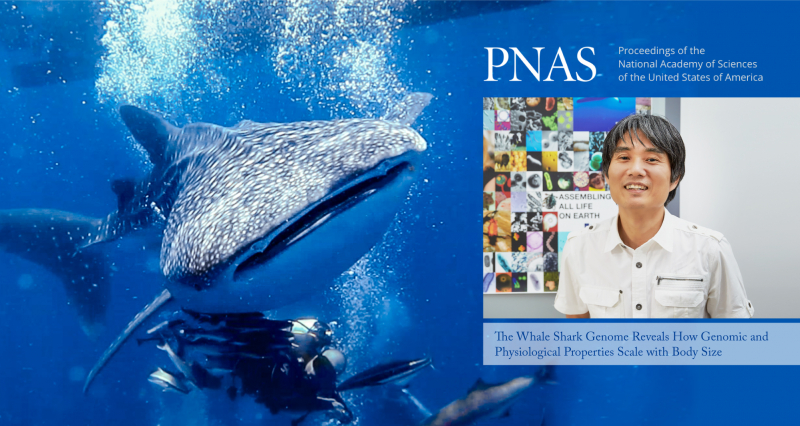UNIST Reveals the Whole Genome Sequences of Whale Sharks