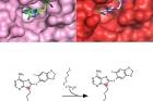 단백질-3차원-구조-분석과-스마트-약물-SMTIN-P01-제작.jpg