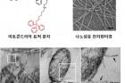 연구그림2_전자현미경으로-관찰한-미토콘드리아에-구멍을-뚫는-나노섬유의-모습.jpg