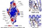 연구그림-소포체-인지질막에-존재하는-Mmm1-단백질.jpg
