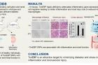 연구그림-톤이비피-유전자가-신장을-손상시키는-과정-연구.jpg