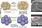 연구그림1_실리콘계-음극-물질에-전해액-첨가제가-작용된-모습금색은-기존-물질이고-보라색은-새로-개발한-전해액-첨가제-적용.jpg