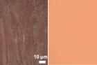 그림6-다결정-금속-포일과-단결정-금속-포일의-비교.jpg