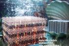 ACS-Nano-표지_전복-껍데기-인공광합성.jpg