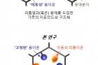 연구그림-유기-골격-구조체-채널을-통한-리튬-이온-이동-개념.jpg