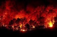산불과 환경오염